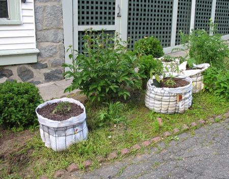 В преддверии садово огородных утех