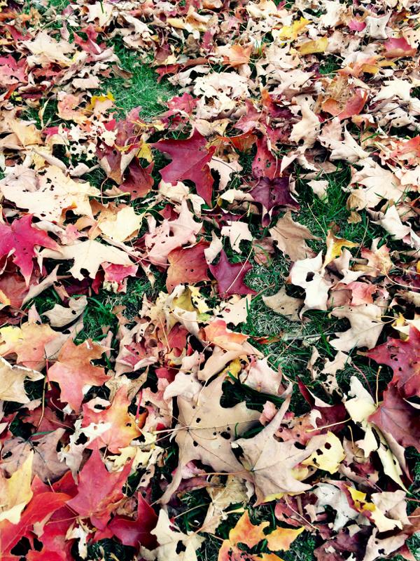 10-20-leaves - 1