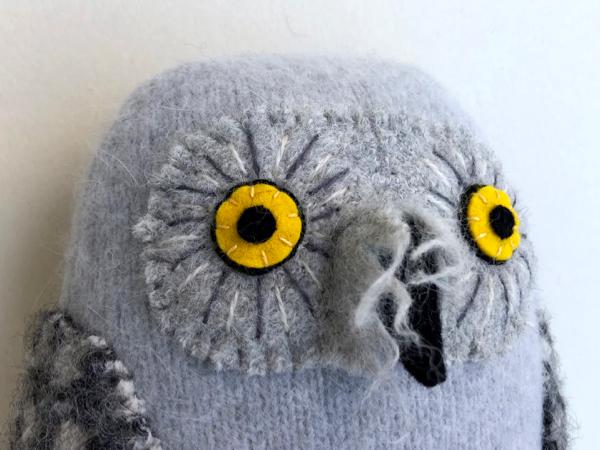 6-29-brown owl 1112 - 4