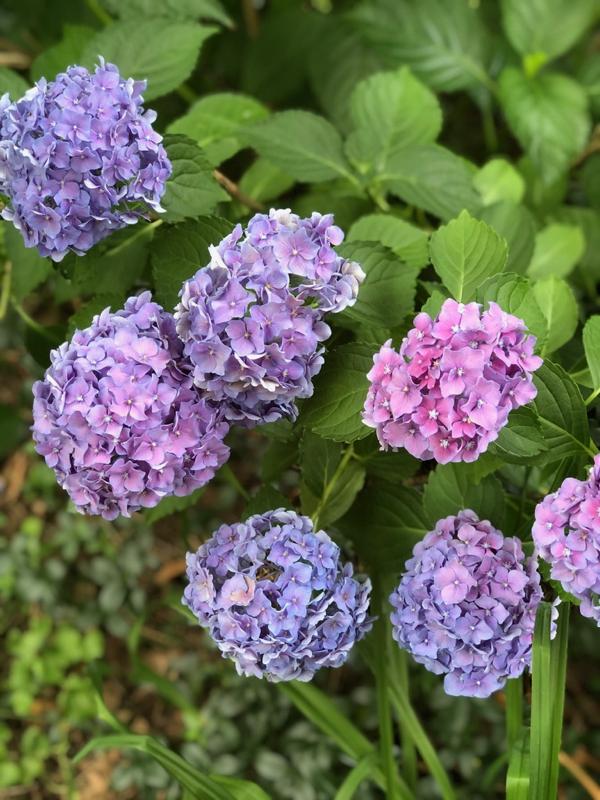 8-8-flowers - 1